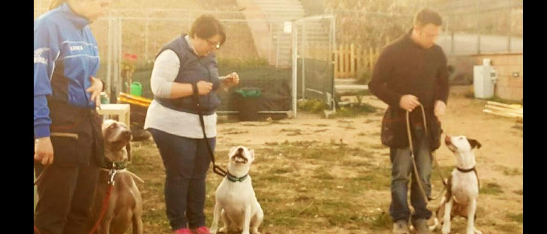 educatori cinofili al lavoro con i loro cani