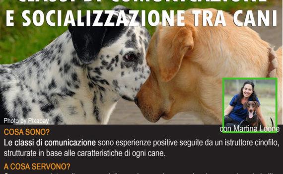 classi di comunicazione e socializzazione tra cani