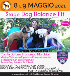 Dog Balance Fit
